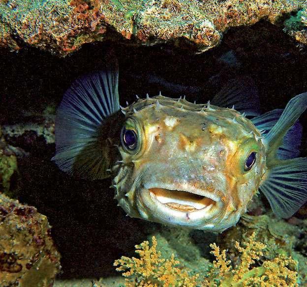 1.jpg - Ядовитые рыбы