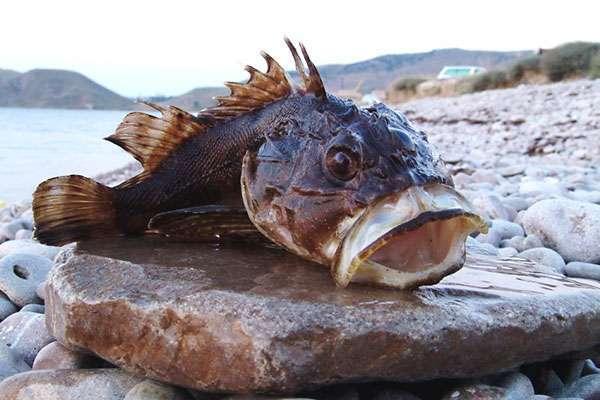 3.jpg - Ядовитые рыбы – и истории про них